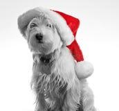 santa σκυλιών Στοκ φωτογραφία με δικαίωμα ελεύθερης χρήσης
