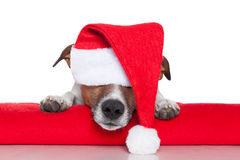 Младенец santa собаки рождества Стоковое Фото