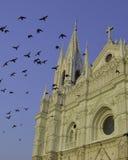 Santa Ana covered in birds Stock Photos