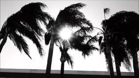 Santa Ana-Winde brennen die Palmen durch, welche die Sonne zu flackern lassen stock footage