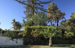 Santa Barbara-buurttuin met een verscheidenheid van installaties stock afbeeldingen