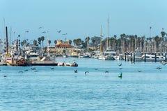 Morning at Santa Barbara Harbor. Nautical Vessels and Pelicans stock photo