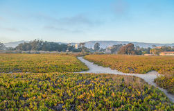 Santa Barbara-kust, Californië stock afbeeldingen