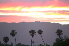 Santa Barbara Sunset. Stunning Santa Barbara California sunset with palm trees Royalty Free Stock Images