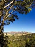 Santa Barbara tree and hillside Royalty Free Stock Photography