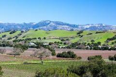 Santa Barbara Wine Area. Santa Barbara wine region view in winter near Los Olivos, California, USA Stock Image