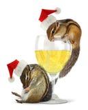 Santa bebidas engraçadas, esquilos vestem o chapéu de Santa Imagens de Stock Royalty Free