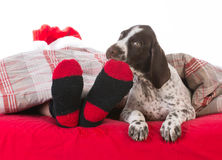 santa in bed with his dog Stock Photography