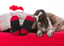 santa in bed with his dog Stock Photo