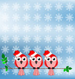 Santa Birds Royalty Free Stock Photo
