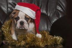 Santa Bulldog Stockfoto