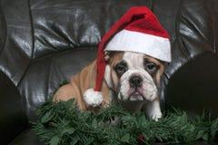 Santa Bulldog fotos de stock royalty free