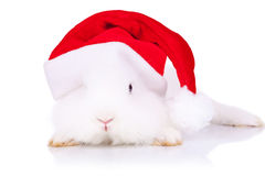 Santa bunny looking to the camera Stock Images