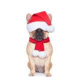 Santa calus dog Stock Photography