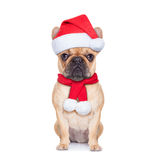 Santa calus dog Royalty Free Stock Photos