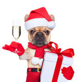 Santa calus dog. Santa claus christmas dog toasting cheers with champagne glass , isolated on white background Stock Image