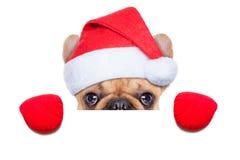 Santa calus dog Stock Image
