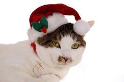 Santa Cat 2 stock image