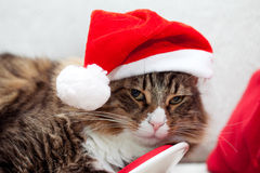 Santa Cat Stock Photography