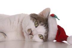 Santa Cat Stock Photos