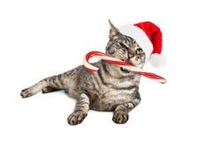 Santa Cat With Candy Cane engraçada Fotografia de Stock