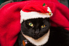 Santa cat Royalty Free Stock Photo