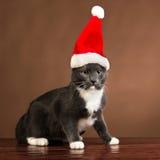 Santa Cat gruñona Fotografía de archivo libre de regalías