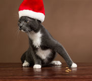 Santa Cat mal-humorada Foto de Stock Royalty Free