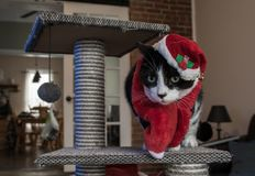 Santa Cat With Red Hat And Scarf Royalty Free Stock Photography