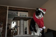 Santa Cat With Red Hat And Scarf Stock Photo