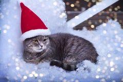 Santa Cat in Santa Hat Stockfotos