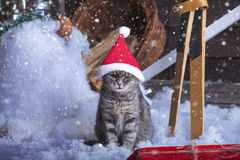 Santa Cat in Santa Hat Lizenzfreie Stockfotografie