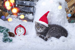 Santa Cat in Santa Hat Fotografia Stock Libera da Diritti