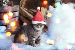 Santa Cat in Santa Hat. Santa cap Cat in the snow Royalty Free Stock Photo