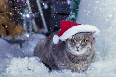 Santa Cat in Santa Hat. Santa cap Cat in the snow royalty free stock photo