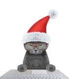 Santa cat using laptop or notebook Stock Image