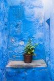 Santa Catalina flower pot Royalty Free Stock Photography