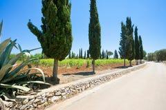 Santa Cesarea Terme, Apulien - auf der Landstraße in Richtung zu Sankt stockfotografie
