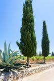 Santa Cesarea Terme, Apulien - ein Kaktus und eine Zypresse neben t stockbild