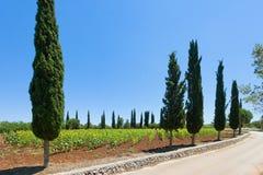 Santa Cesarea Terme, Apulien - Sonnenblumen auf einem Feld vor dem h stockfotografie