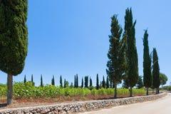 Santa Cesarea Terme, Apulien - Sonnenblumen neben dem Land r stockfoto