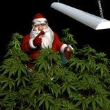 Santa che innaffia il suo raccolto di marijuana Fotografia Stock Libera da Diritti