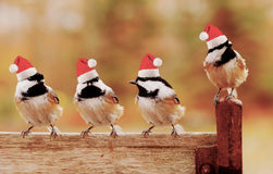 Santa chickadees Stock Photos