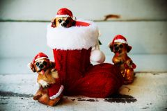 Free Santa Christmas Dog In A Red Boot Stock Images - 102071194