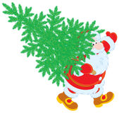 Santa with Christmas tree Stock Photo