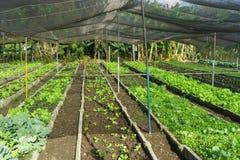 Santa Clara, Kuba, am 5. Januar 2017: Organischer städtischer Obstgarten in Kuba stockfoto