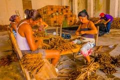 SANTA CLARA KUBA - SEPTEMBER 08, 2015: Handgjord cigarrförberedelse av tobaksidor Royaltyfri Foto