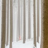 Santa Claus apressada está correndo rapidamente através das madeiras fotos de stock