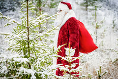 Santa Claus avec le sac de cadeau marchant par la forêt Images libres de droits