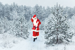 Santa Claus carries gifts. Santa Claus flying through the sky over the snow-covered forest Stock Image